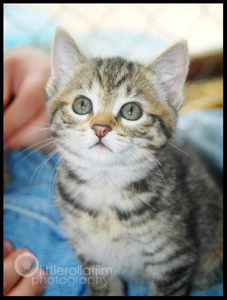 kittens03