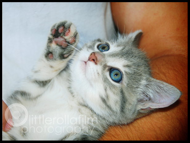 kittens10