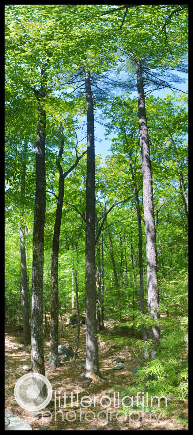 TreePanoramic-Audubon5-18-15